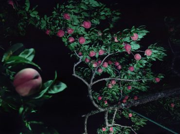 桃樹春秋—栁美和個展 Peaches in Time – Miwa Yanagi Solo Exhibition